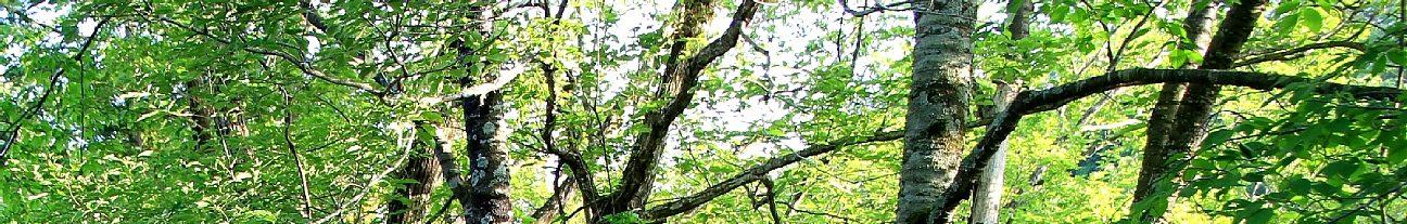 千葉県立 清和県民の森